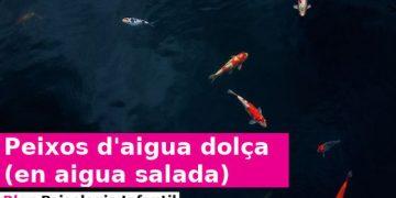 Peixos d'aigua dolça (en aigua salada)